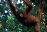 borneo_revealed_travel_image